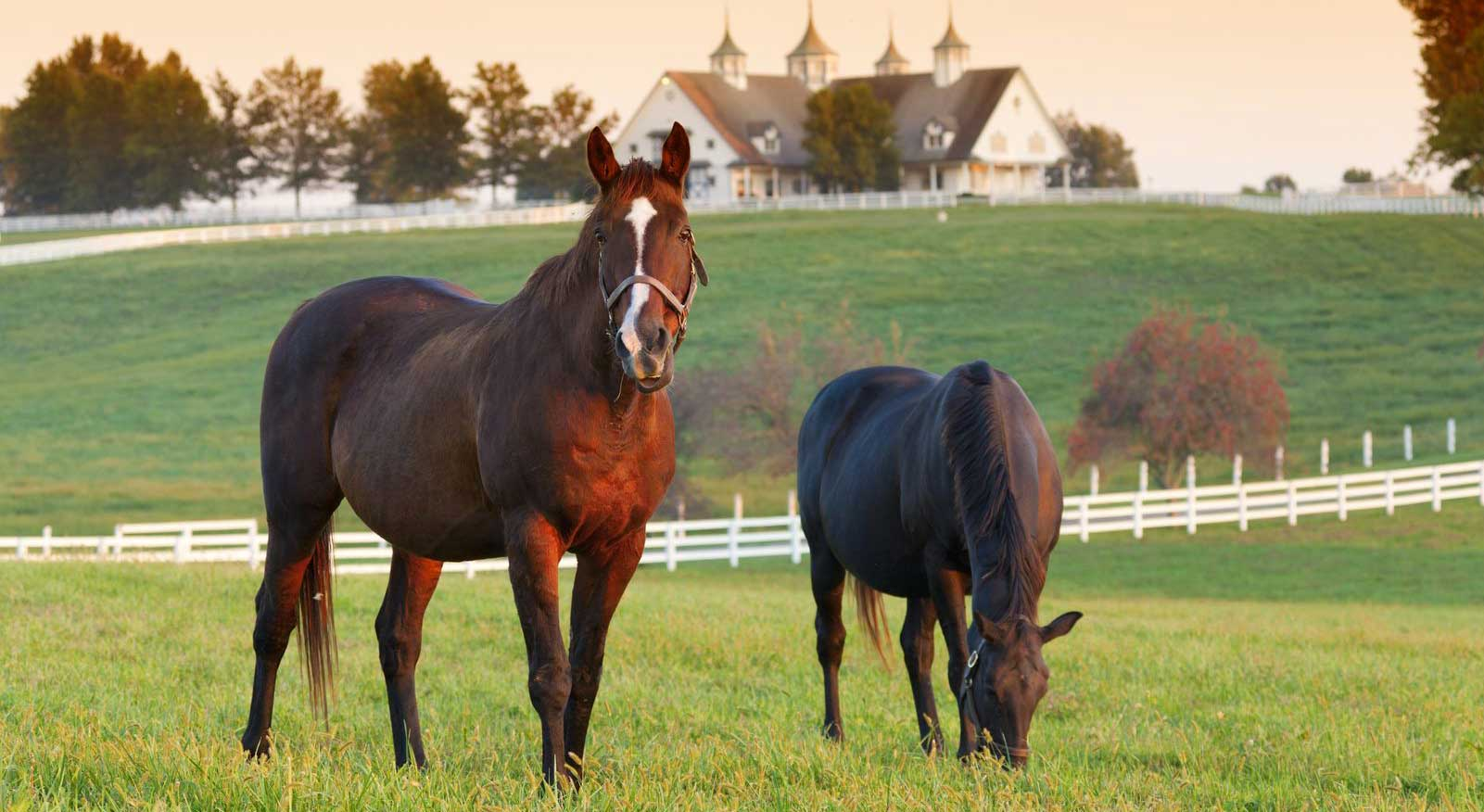 pa horse farms for sale, eastern pa horse properties, pa horse property specialists