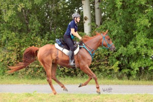 Eastern PA Endurance Rider Offered Competition Opportunity in Brazil