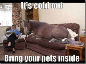 Keep Your Horses Warm In Cold Pennsylvania Weather