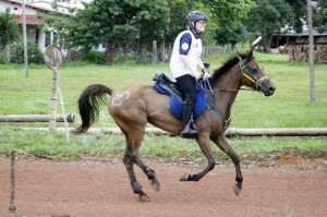 PA Endurance Rider Holly Corcoran Makes International Connections Competing In Brazil