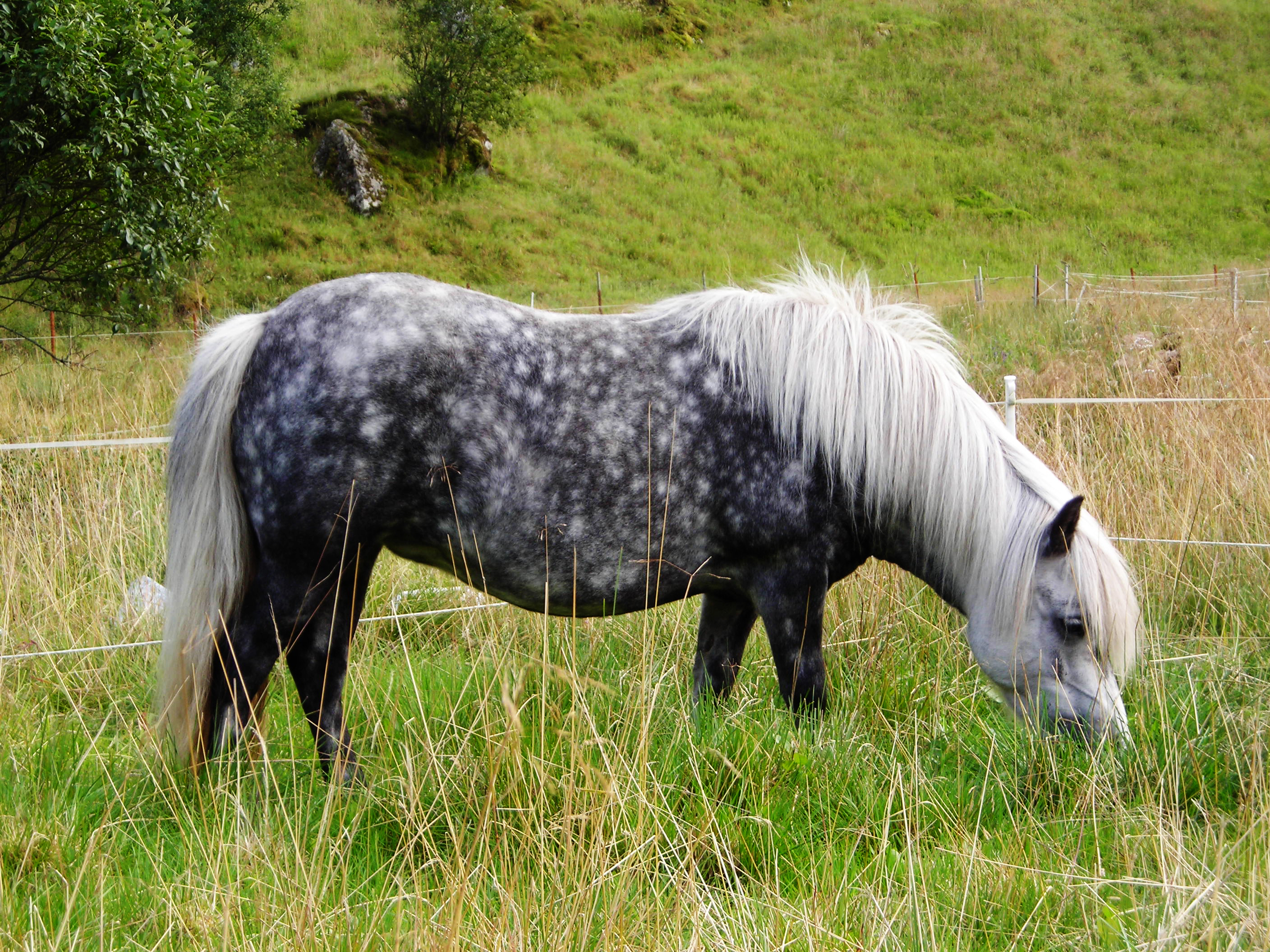 Spring Grass Safety For Horses