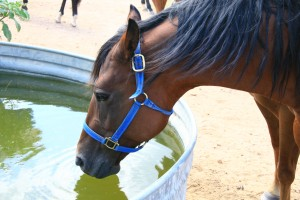 Keep Your Horses Hydrated As The Weather Heats Up