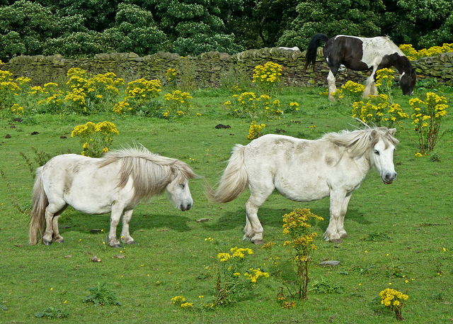 Spring Is Here, Get Ready To List Your PA Horse Farm!