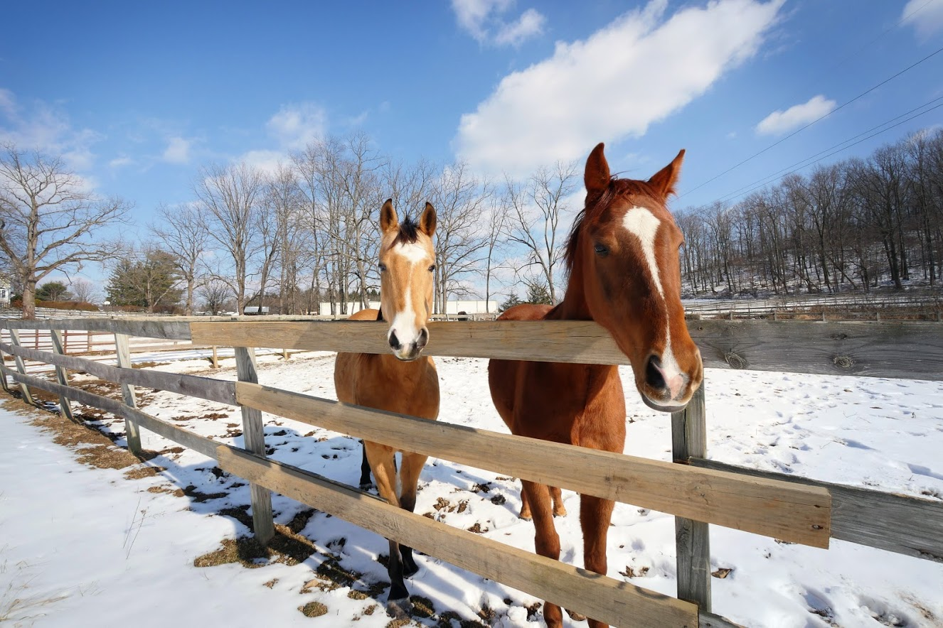 Caring for your Horse this Winter